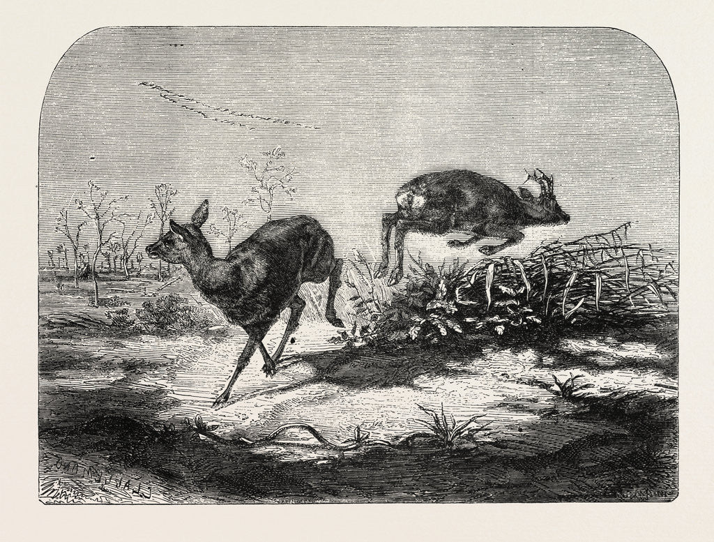 Detail of Deer Surprised by Mr. Haffner by Anonymous