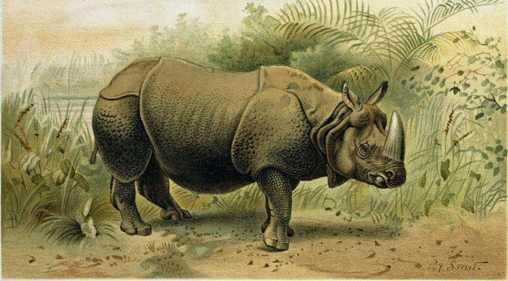 Detail of Indian Rhinoceros by Anonymous