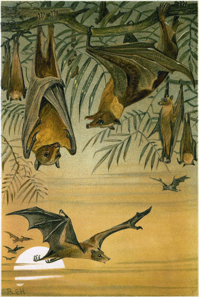 Detail of Fruit Bats by Anonymous