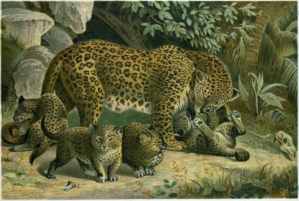 Detail of Leopard by Anonymous