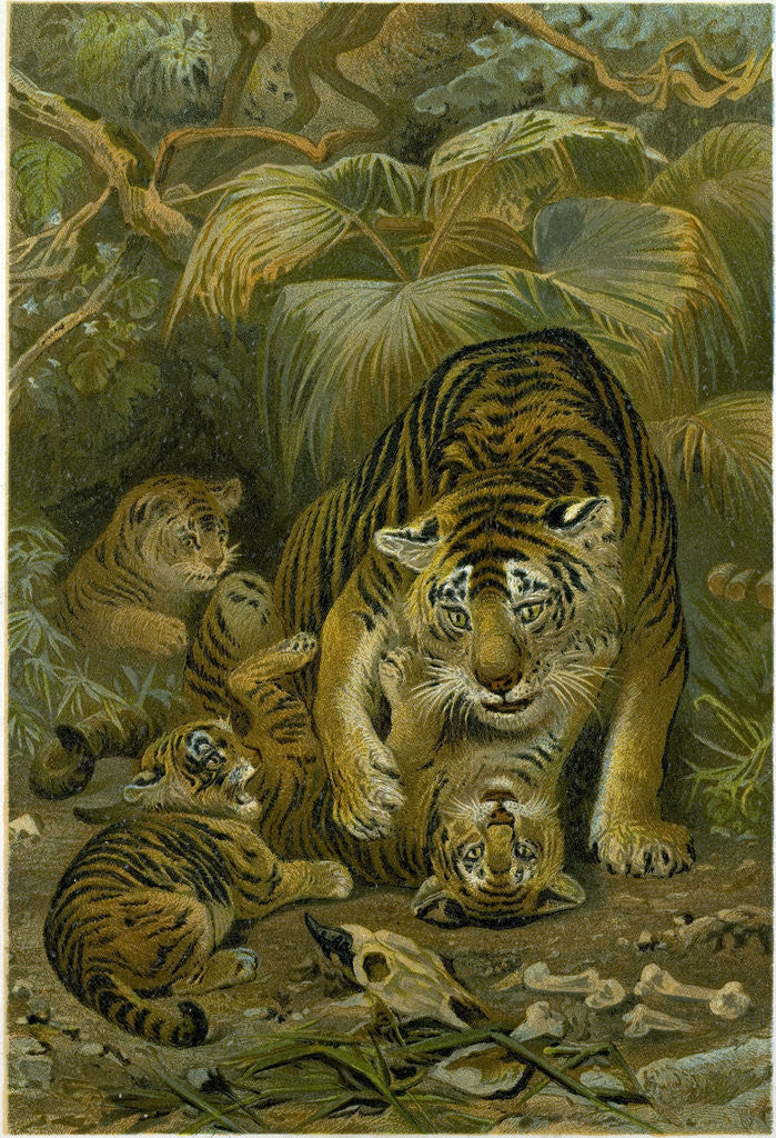 Detail of Tigress and Cubs by Anonymous