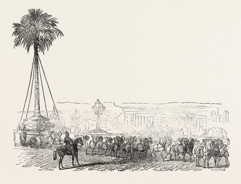 Detail of Removal of a Gigantic Palm-Tree from Messrs. Loddiges' at Hackney to the Crystal Palace 1854 London UK by Anonymous