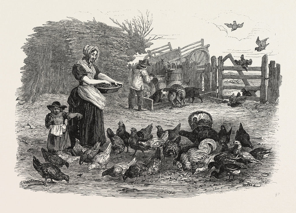 Detail of Agricultural Pictures the Poultry-Yard, 1847 by Anonymous