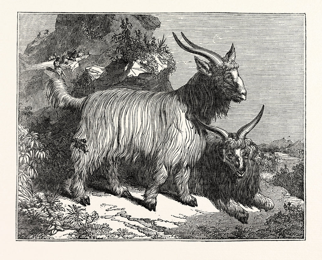 Detail of Kashmir Goats by Anonymous
