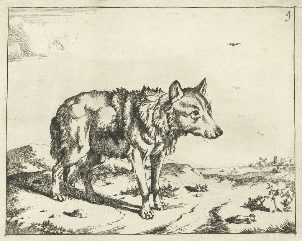 Detail of Standing wolf, and profil by Paulus Potter