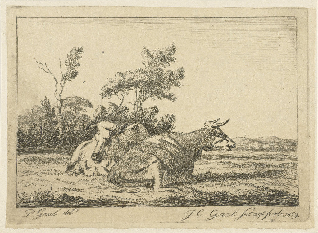 Two white cows lying in front of a group of trees by Jacobus Cornelis Gaal
