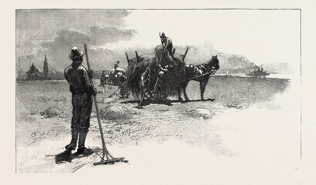 Detail of French Canadian Life, Gathering Marsh Hay, Canada by Anonymous