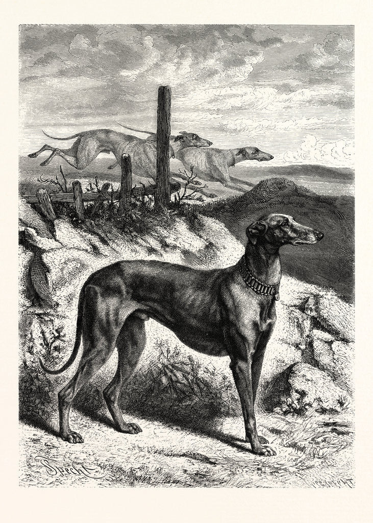 Detail of English Greyhounds by Anonymous