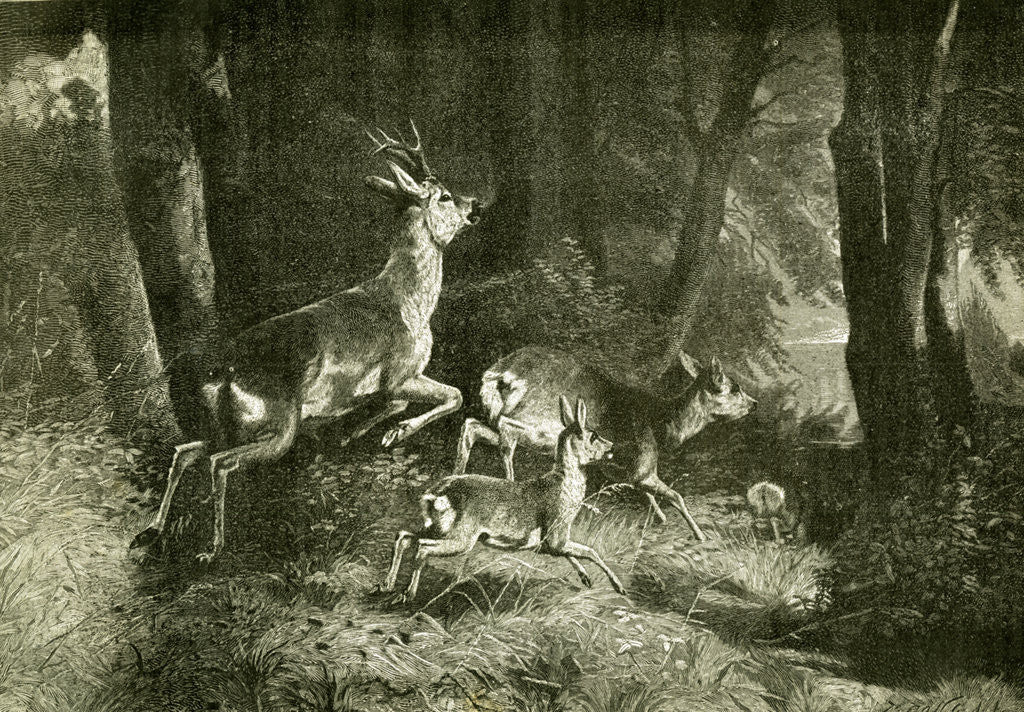 Detail of Deer Austria 1891 by Anonymous