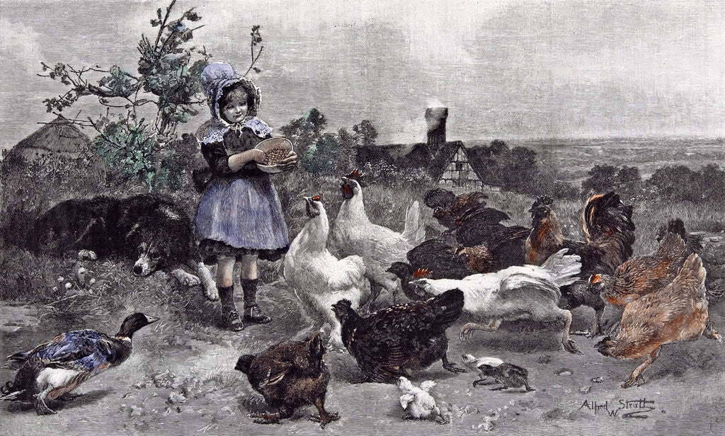 Detail of A Morning Call Chicken A.W. Strutt Child 1891 by Anonymous