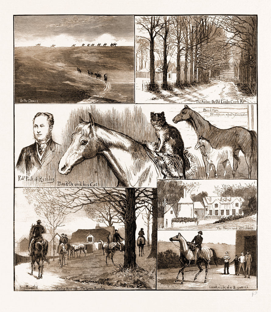 A Day At The Russley Stables, 1881; A Horse And A Cat
