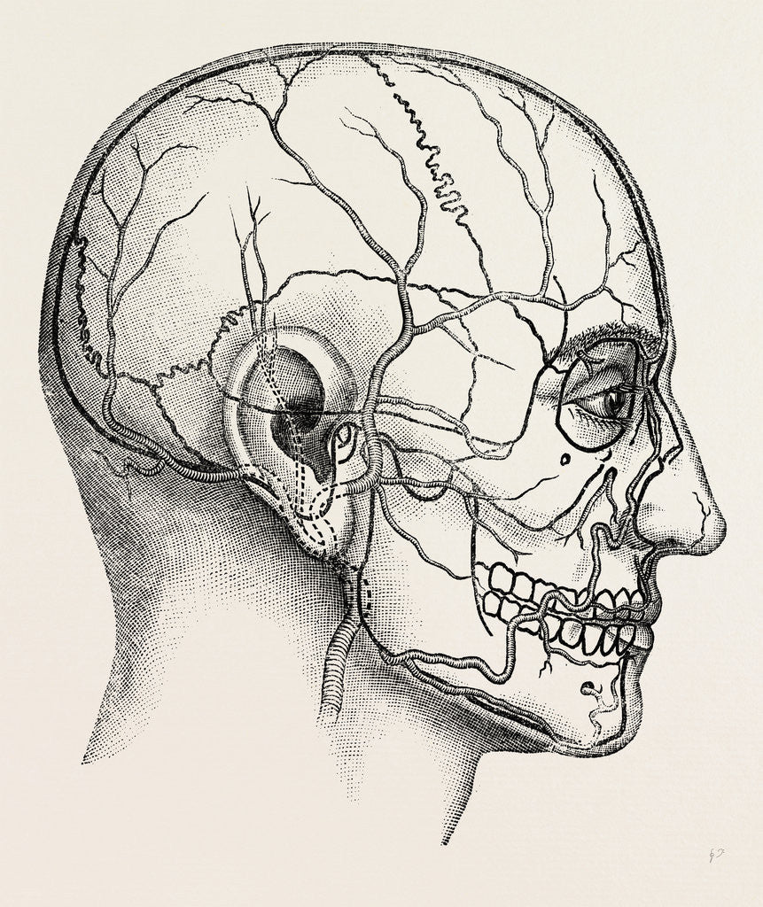 Diagram to show the position of the facial