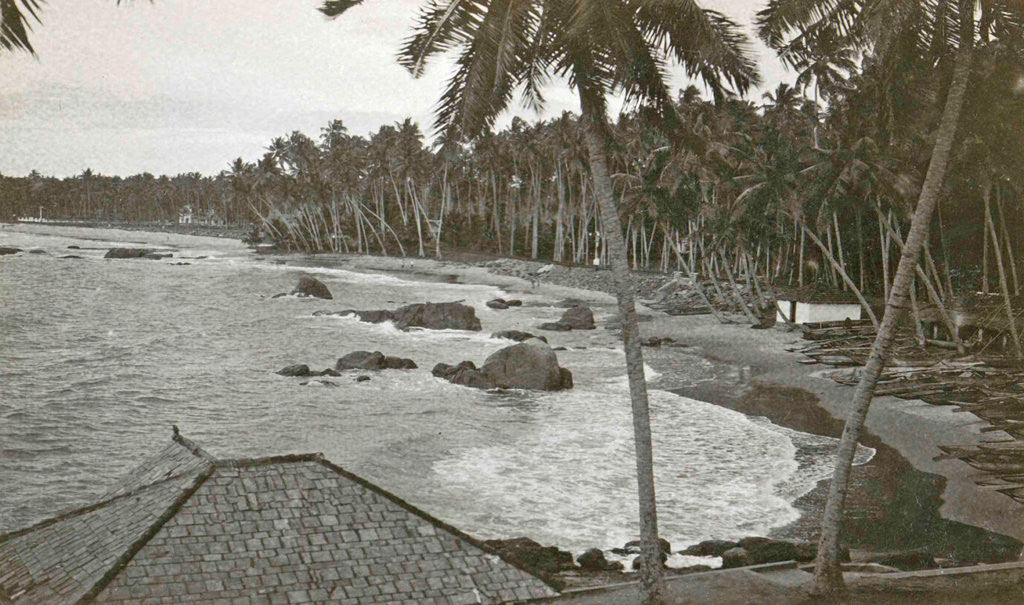 Detail of Ceylon, palm beach Mount Levinia in Colombo, Sri Lanka by Anonymous