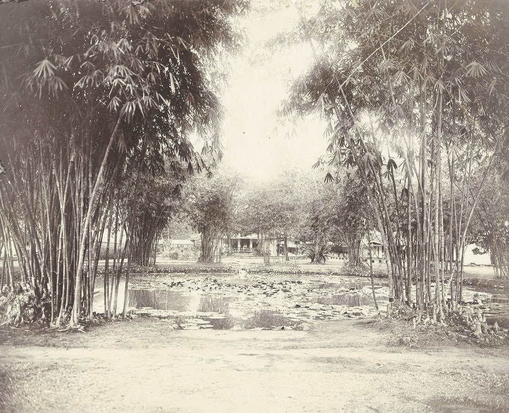 Detail of Bamboo Garden and pond with a house by Anonymous