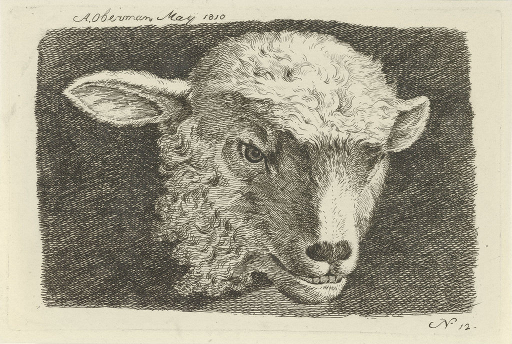 Detail of Head of a lamb by Anthony Oberman