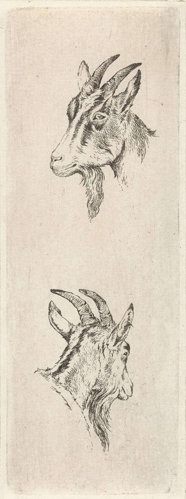 Detail of Goats head by Pieter Janson