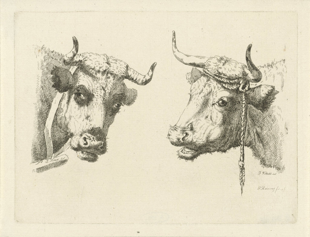 Detail of Two cows heads by Pieter Roosing