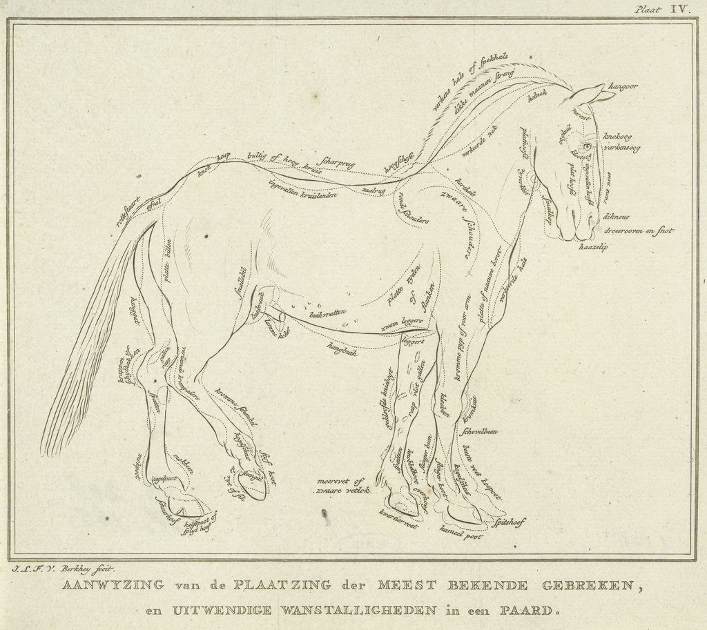 Detail of Anatomy of horse with possible defects in physique by Johannes le Francq van Berkhey