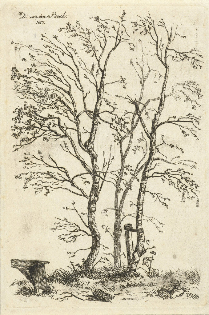 Detail of Three birch trees by D. van den Bosch