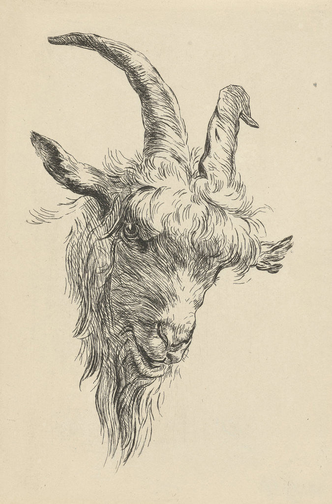 Detail of Head of a goat by Jan Kobell