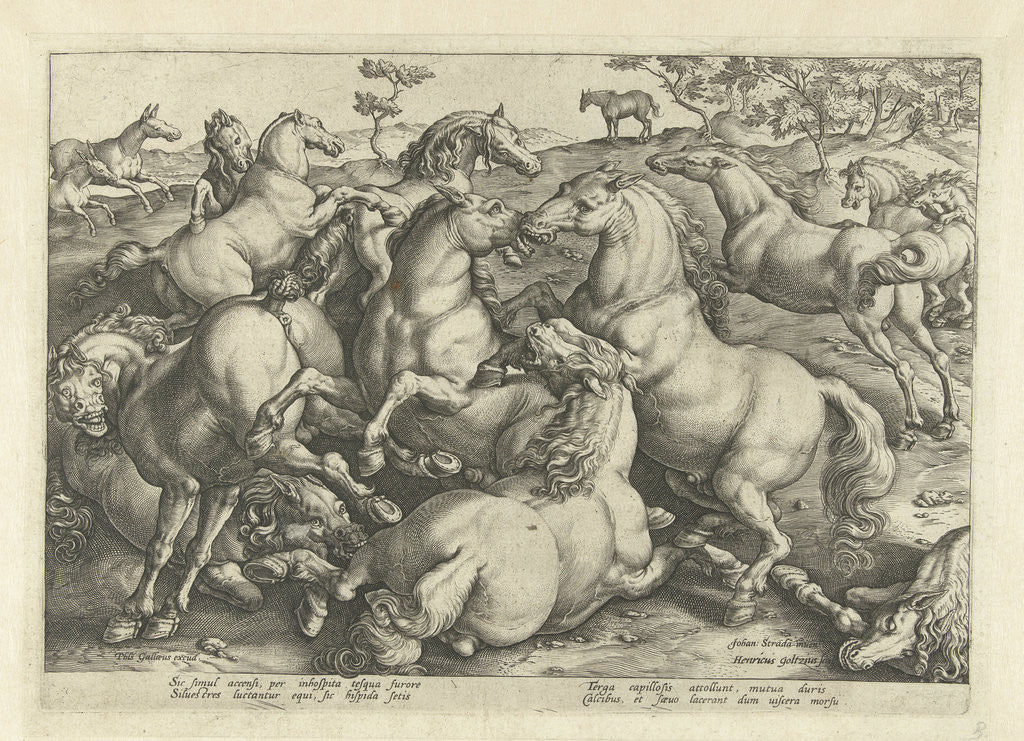 Twelve horses fighting by Philips Galle