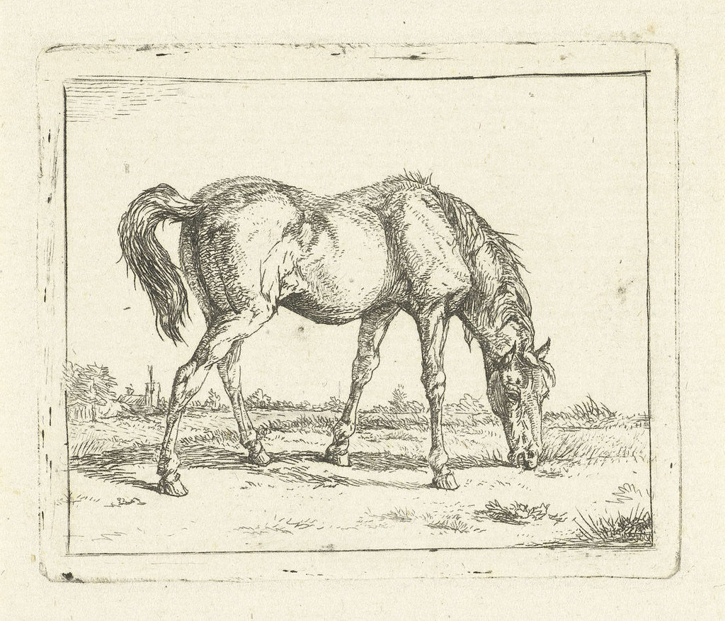 Detail of grazing horse right by Jan Dasveldt