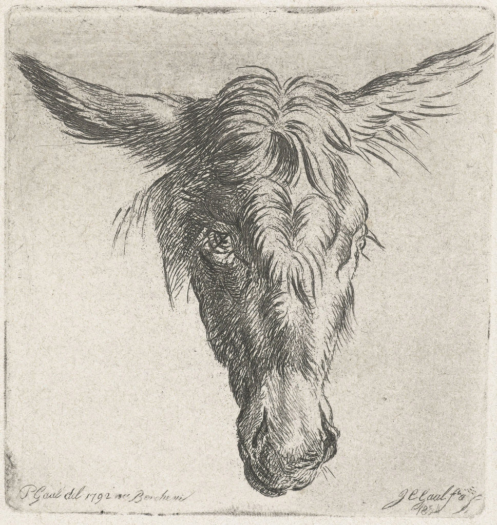 Detail of Head of a donkey by Jacobus Cornelis Gaal
