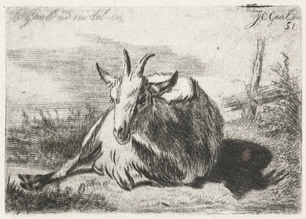 Detail of Lying goat, left by Jacobus Cornelis Gaal