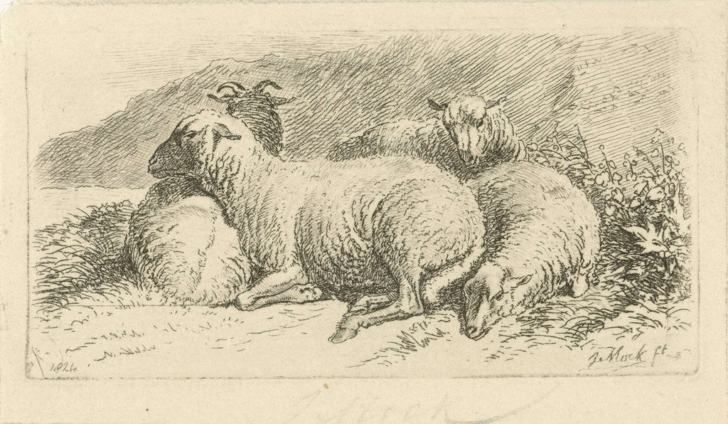Detail of Four sheep lying by Johannes Mock