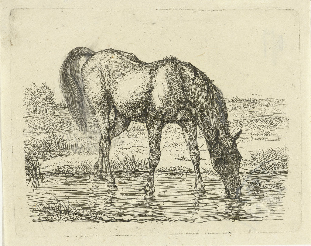 Drinking horse by Jan Dasveldt