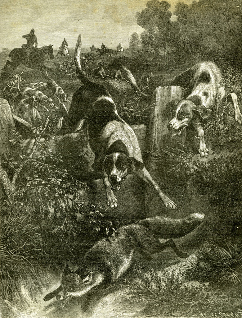 Detail of Hunt Austria Fox 1891 by Anonymous