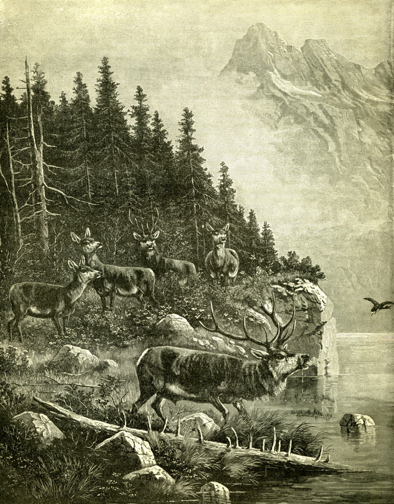 Detail of Hunt Austria Deer 1891 by Anonymous