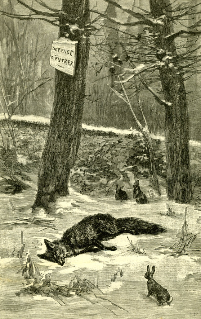 Detail of Hunting Fox Austria 1891 by Anonymous