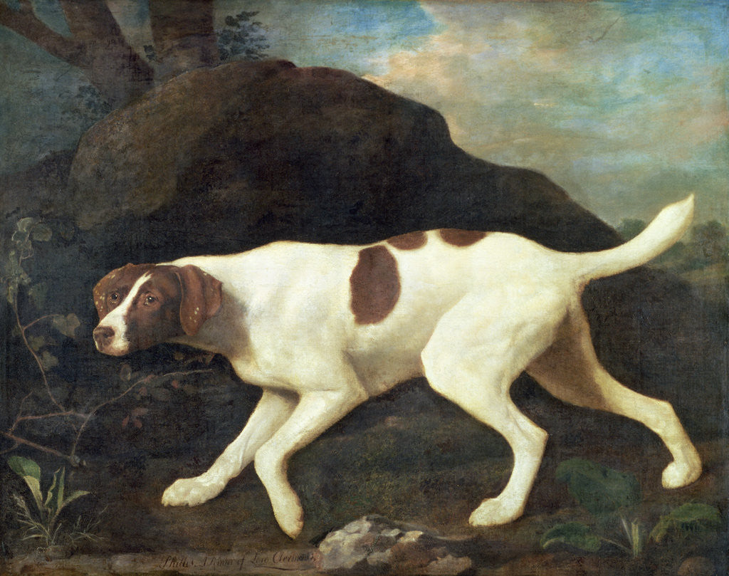 Detail of Phillis, a Pointer of Lord Clermont's, 1772 by George Stubbs