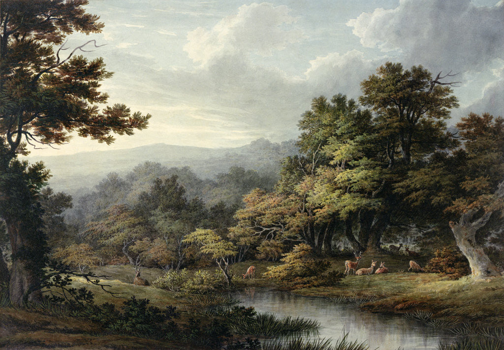 Detail of Forest Glade with Pool and Deer by John Glover