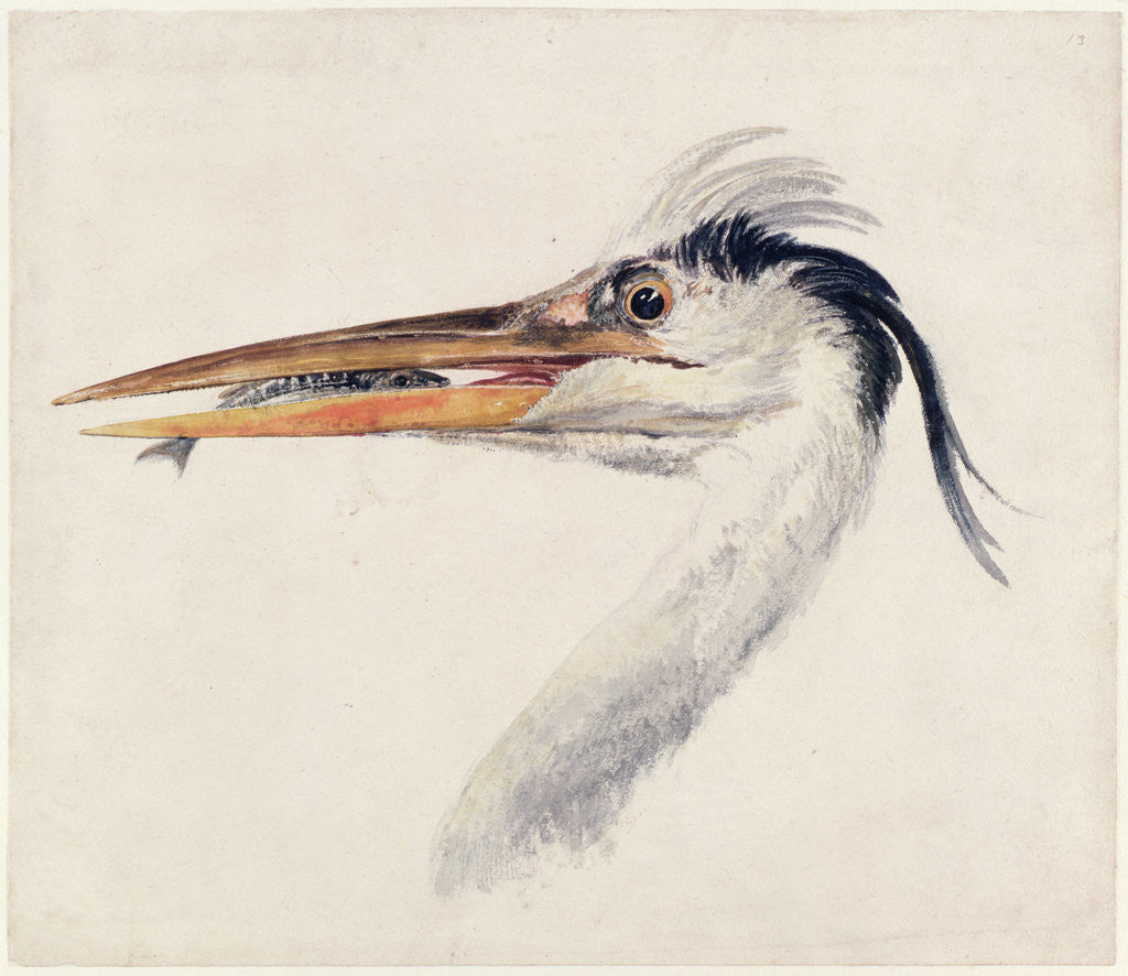 Detail of Heron, from The Farnley Book of Birds, c.1816 by Joseph Mallord William Turner