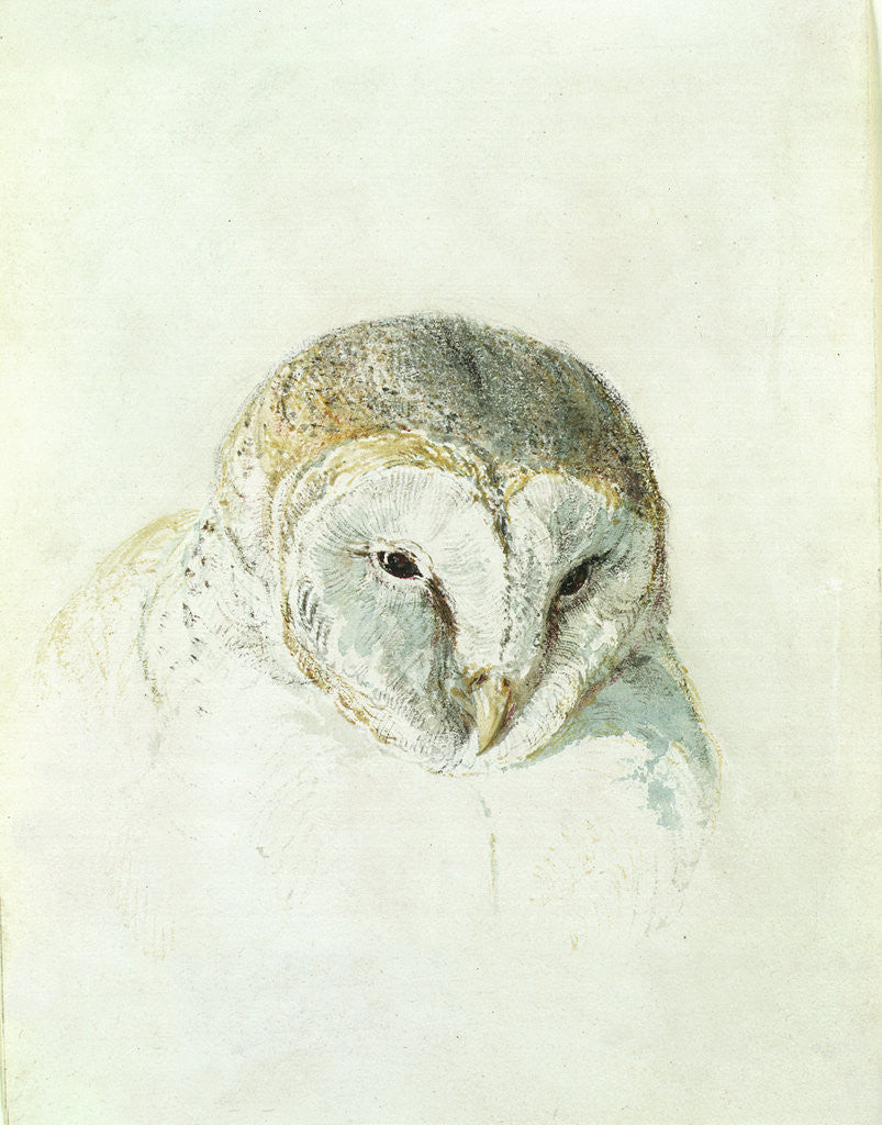 Detail of White Barn Owl, from The Farnley Book of Birds, c.1816 by Joseph Mallord William Turner