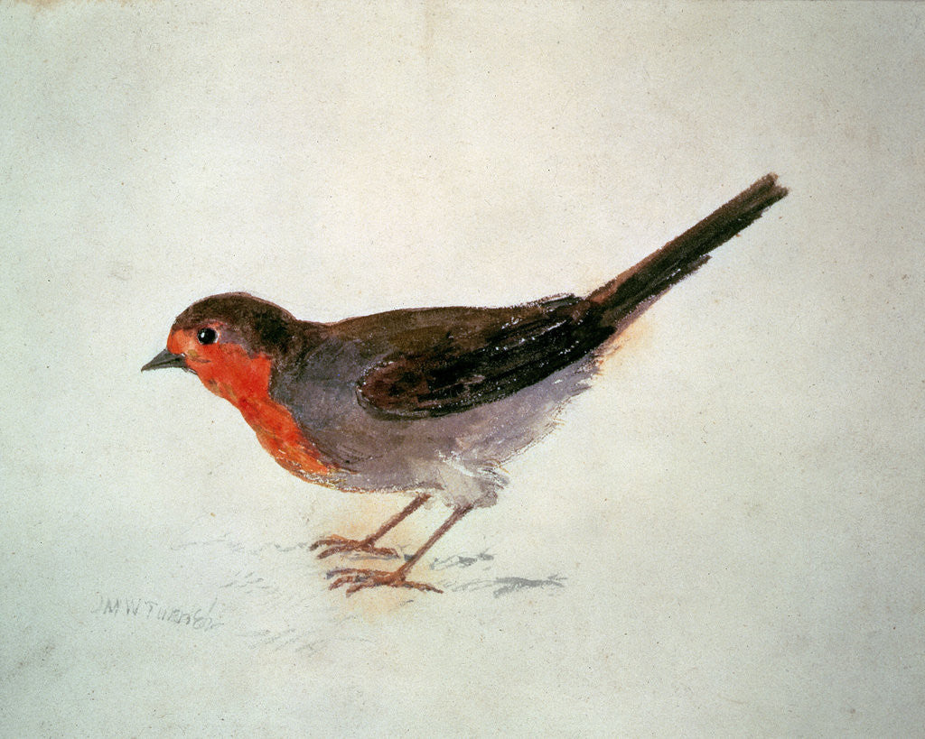 Detail of Robin, from The Farnley Book of Birds, c.1816 by Joseph Mallord William Turner