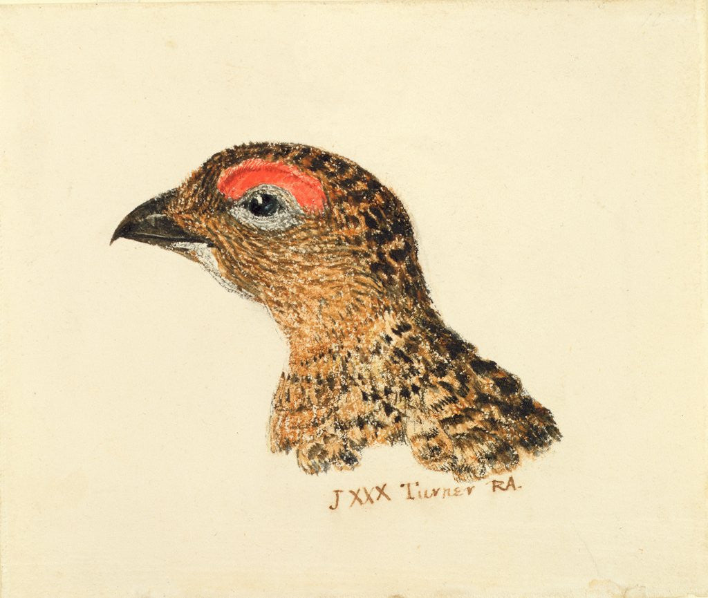 Detail of Head of Grouse, from The Farnley Book of Birds, c.1816 by Joseph Mallord William Turner