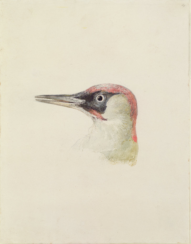 Detail of Woodpecker, from The Farnley Book of Birds, c.1816 by Joseph Mallord William Turner