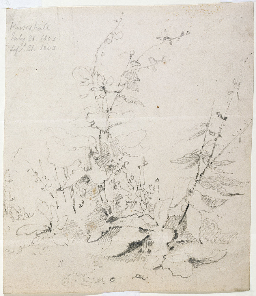 Detail of Study of Weeds, Kirkstall, 1803 by John Sell Cotman