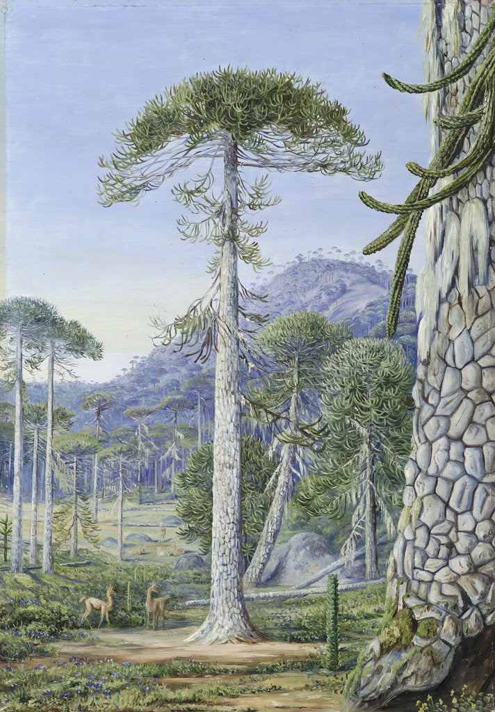 Detail of 4. Puzzle-Monkey Trees and Guanacos, Chili by Marianne North