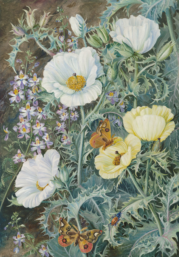 Detail of 11. Mexican Poppies, Chilian Schizanthus and Insects. by Marianne North