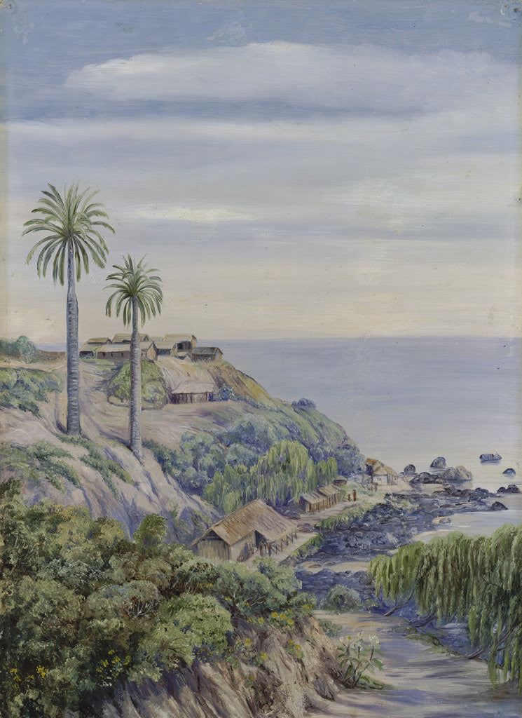 17. View of Concon, Chili, with its two Palms by Marianne North