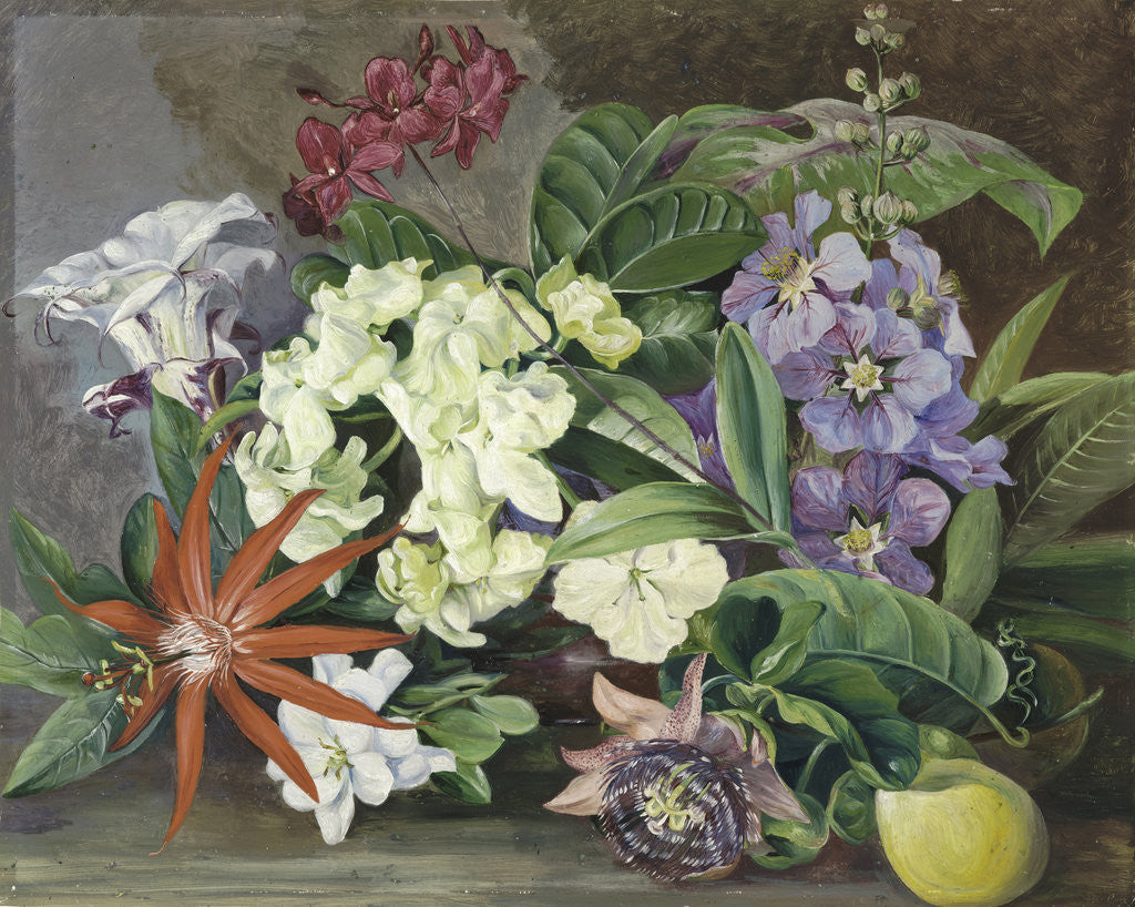 Detail of 147. Cultivated Flowers; painted in Jamaica. by Marianne North