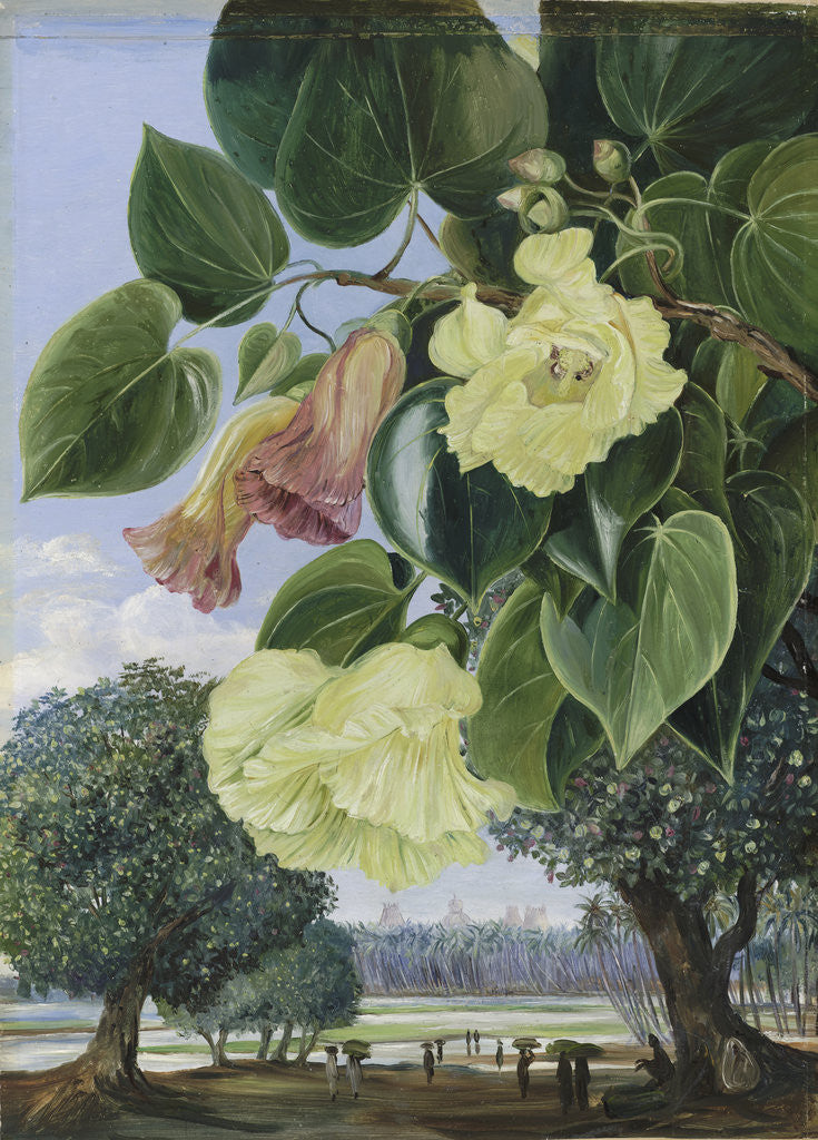 Detail of 256. Foliage and Flowers of the Suriya or Portia; the Pagodas of Madura in the distance. by Marianne North