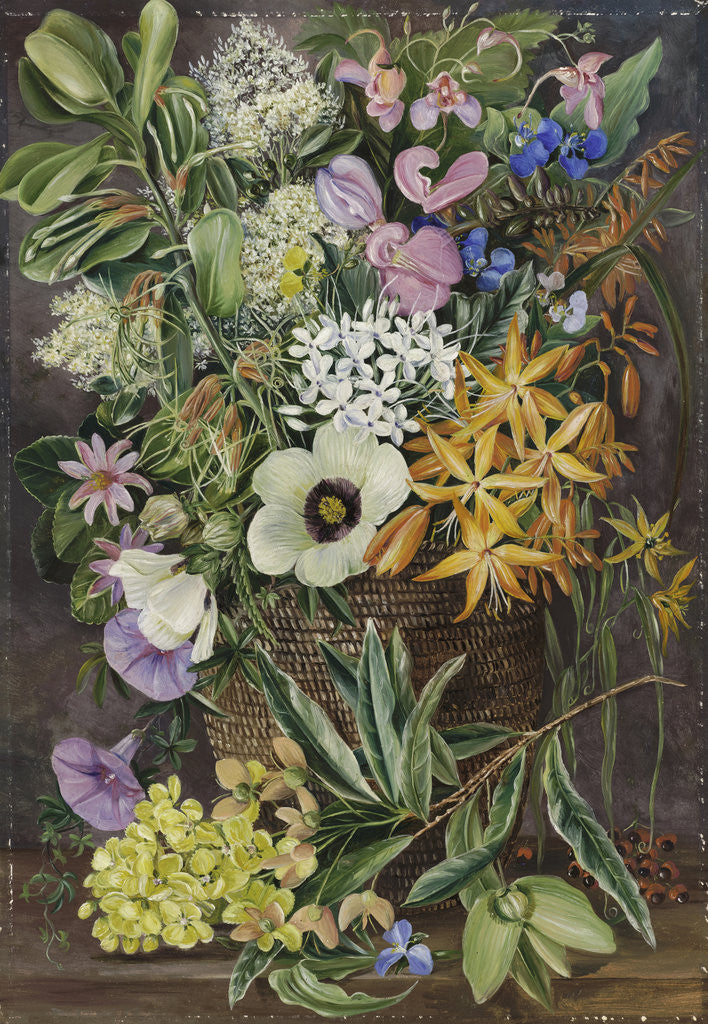 Detail of 375. Flowers of St. John's in Pondo Basket. by Marianne North