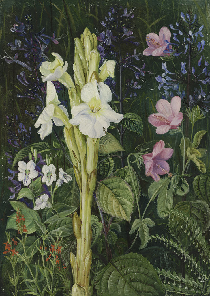 Detail of 402. Cape Colours. by Marianne North