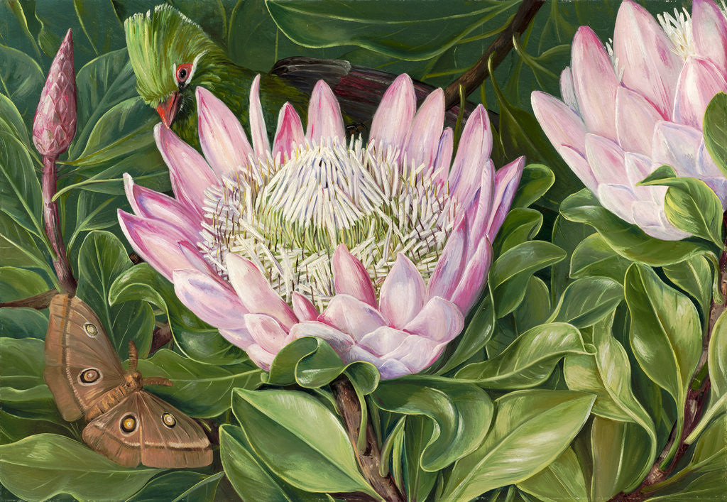 Detail of 419. Not one Flower, but many in one, Van Staaden's Kloof. by Marianne North
