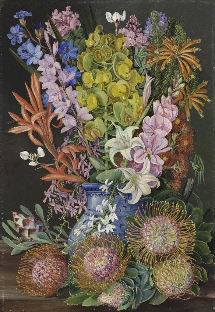 Detail of 438. Wild Flowers of Ceres, South Africa. by Marianne North